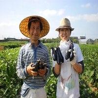 1.3haのとても広い羽田さんの畑