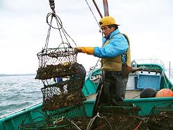 新鮮な美味しい牡蠣を全国より、仕入れております。
