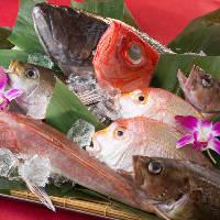 旬の魚や高級魚など厳選仕入れの鮮魚は日替わりの逸品もご用意