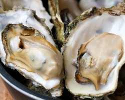 「牡蠣×焼肉」至福の組み合わせ。カキ小屋ならではの新鮮な牡蠣