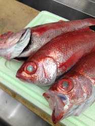 地元の漁港で水揚げされた鮮魚を提供!!