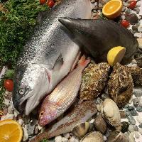 遠州灘や三河湾はじめ、伊勢湾、駿河湾など近郊でとれた新鮮魚介
