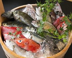 紀州箕島漁港や室戸岬などから毎日空輸で仕入れる鮮度抜群の魚介