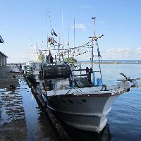 金沢港や能登の漁港、それぞれから鮮魚が毎日直送されています。