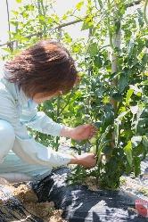 季節野菜は自家農園で栽培したものを使用しております