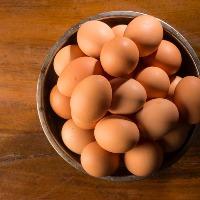 玉子料理には、新潟県・新発田で生産されている最高級卵を使用