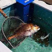 《店内生簀完備》 生簀から出したばかりの鮮魚が自慢!