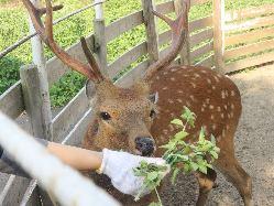 """看板""""鹿""""の「こまる」です♪是非会いに来てください♪"""