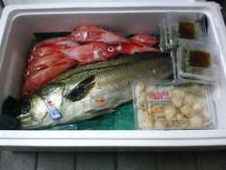 毎日納品される新鮮、鮮度抜群の魚介 毎日替わるおすすめは必見