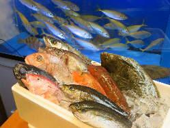 鮮魚・銀鮭・活帆立など盛り沢山!東北名物料理も