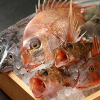 全国直送の鮮魚を刺身/焼き/煮物で!