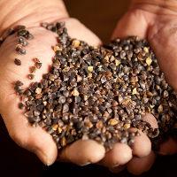 山形県最上地方で栽培された蕎麦を自家製粉にて提供致します