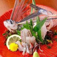 【市場直送】 その日の美味しいお魚をお刺身でご提供いたします