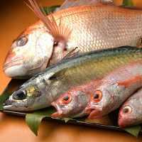 毎日親方が市場から旬の新鮮な魚を仕入れています。