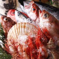 ◆漁港直送・朝〆旬魚入荷中◆ 〜蔵元直送・地酒と共に〜