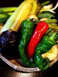 ☆こだわりの野菜達☆ 旬を食べて、四季を感じてください!