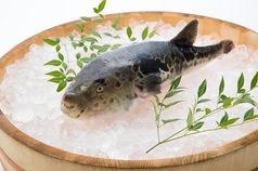 最高の旬魚で絶品の鍋を!寄せ鍋、てっちりなど…!