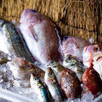 毎日新鮮な魚介類を仕入れています!日替わりメニューが見所!