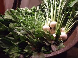 東区でこんなに凄い野菜が創られてますっ♪