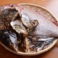 毎日届く瀬戸内鮮魚!小鰯、穴子や牡蠣、県外客のおもてなしにも