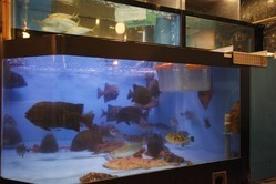【店内には巨大な水槽あり】 12種類以上の新鮮な活魚!