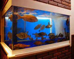 いけすから旬な魚や瀬戸内の魚を、板前が調理します。