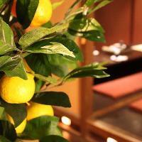 【柚子香るような空間】心落ち着く上質な雰囲気の店内空間
