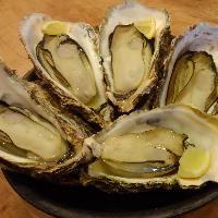 石まつの牡蠣は、こだわりの牡蠣3種を使い分けて料理しています