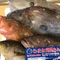 【地元大社漁港直送鮮魚】