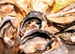 各地の新鮮な牡蠣を仕入れています。